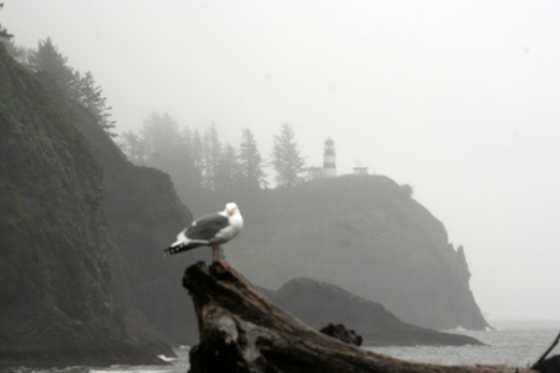 Cape Disappointment Image